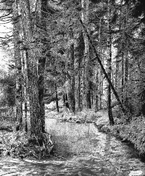 针管笔手绘风景树
