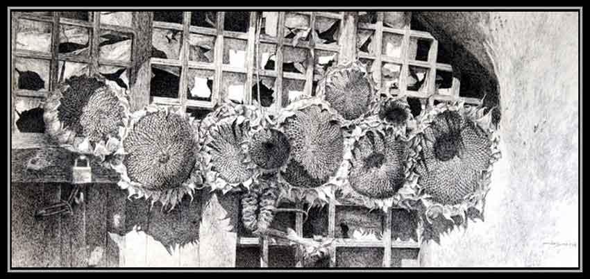 动物黑白素描画