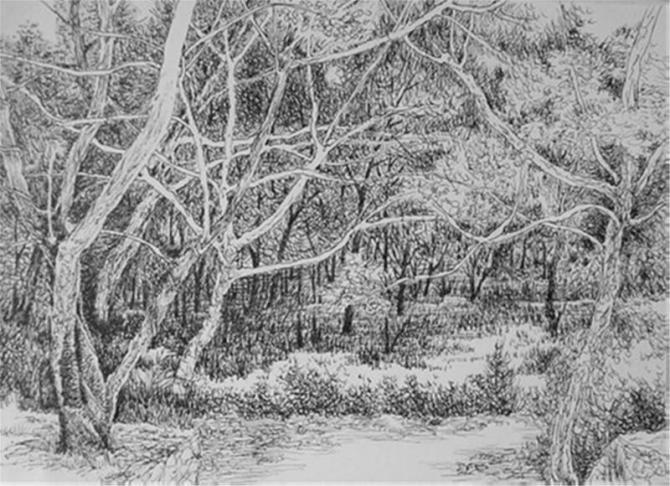 钢笔画论坛 钢笔画论坛 《小树林》写生钢笔画  内容