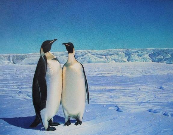 彩色钢笔画《企鹅》